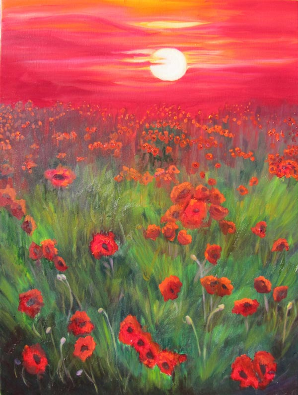 red poppies sunset