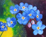 Forget Me Not California Blue